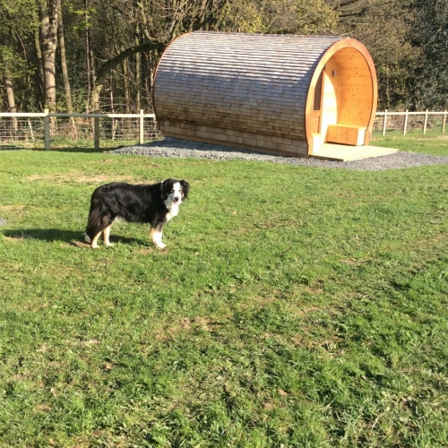 Dog-friendly glamping pods in Ellesmere, Shropshire